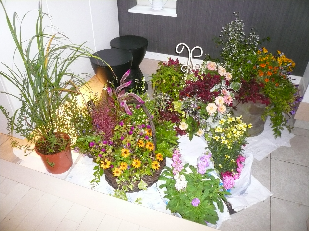 お花も避難しました!