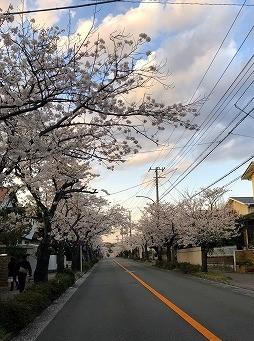 4月上旬の風景